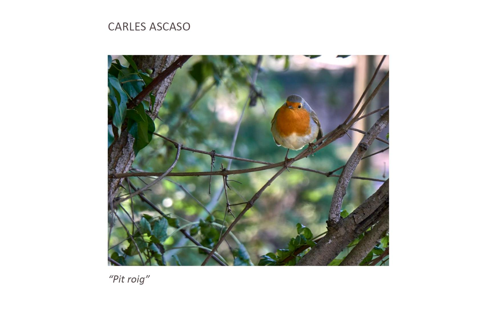 Carles_Ascaso