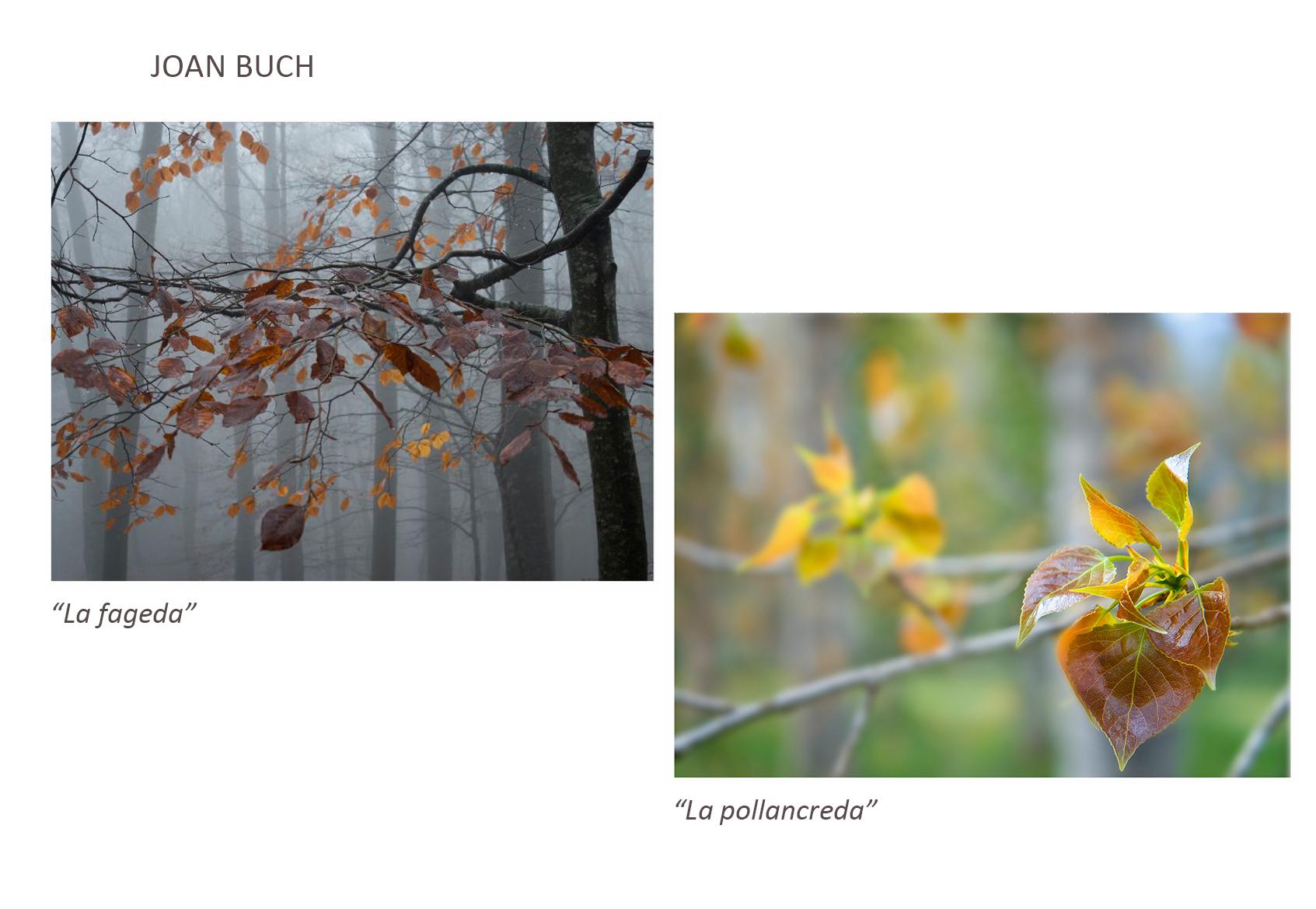 Joan_Buch
