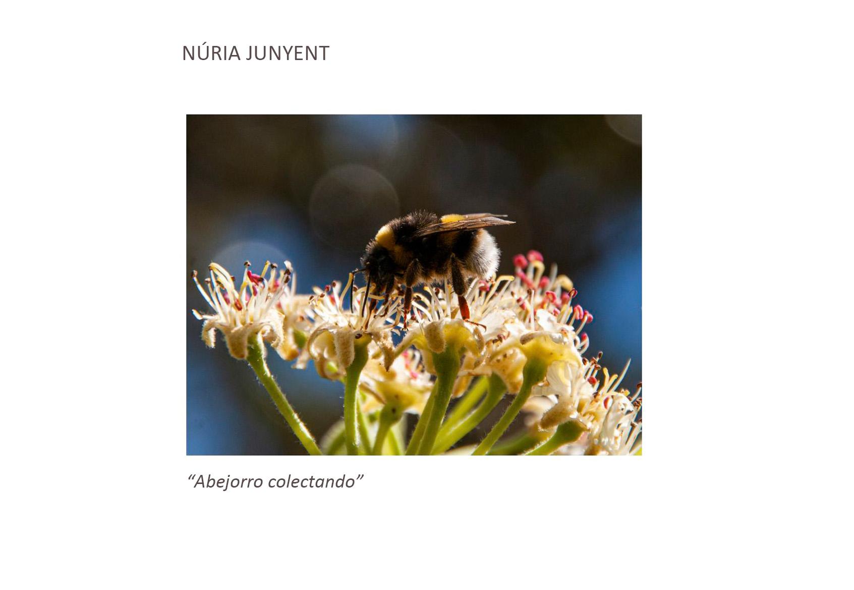 Núria_junyent