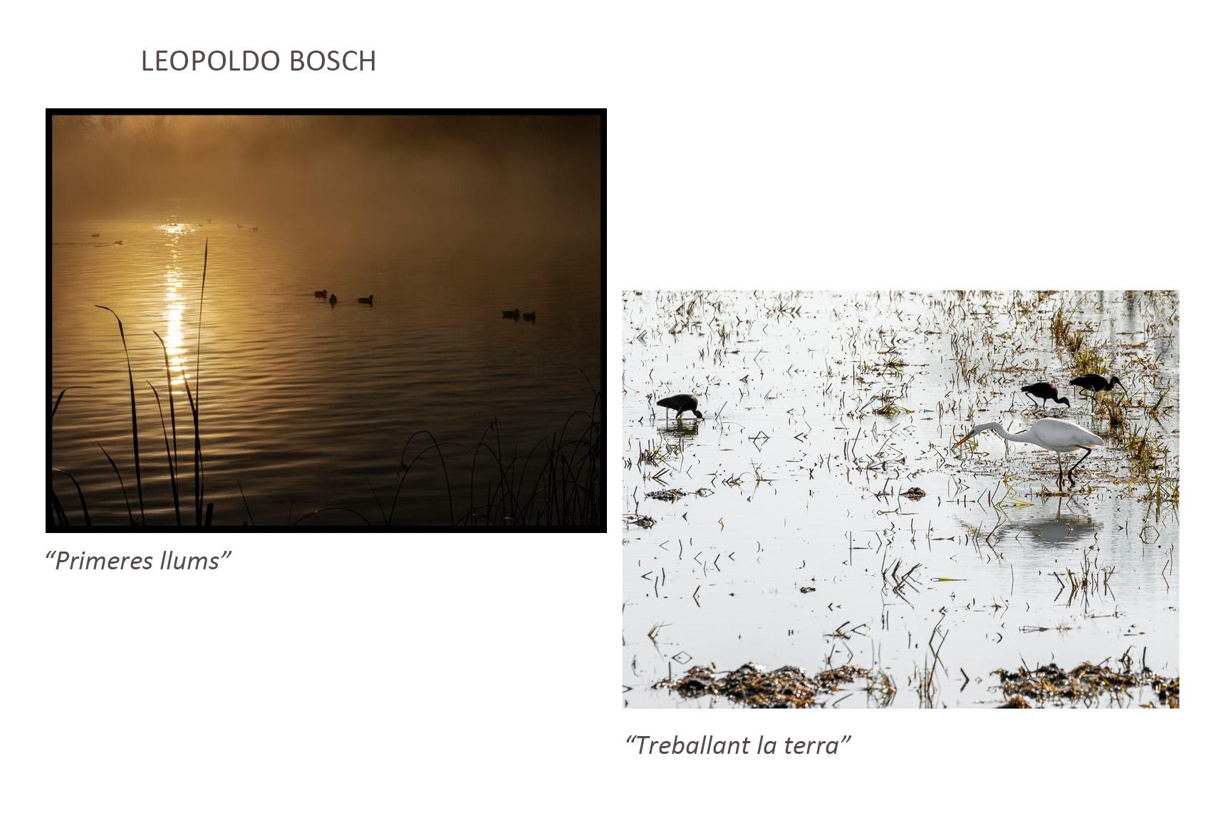 Pol_Bosch