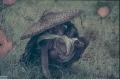 4.10-1984-Orissa-106-Jeypore-Land-W-baby0001