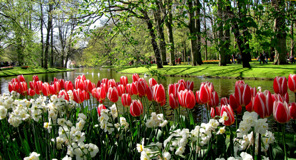 Keukenhof park, Haarlem, Netherland